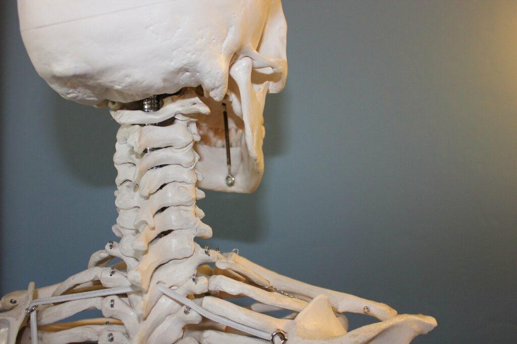vårdförlopp osteoporos
